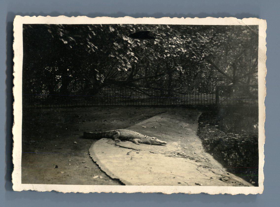 Indochine sa gon jardin botanique crocodile vintage for Jardin indochine