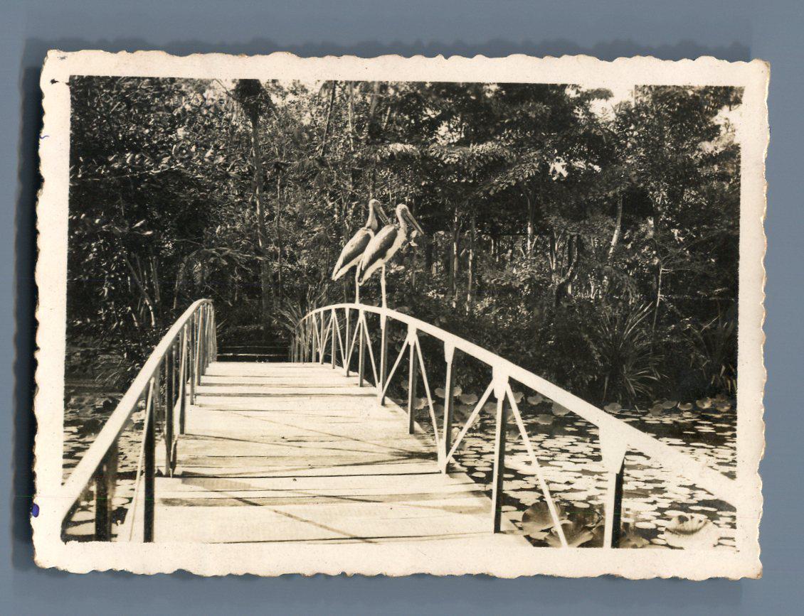 Indochine sa gon pont dans le jardin botanique vintage for Jardin indochine