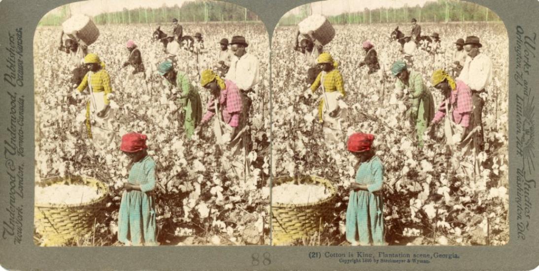 Plantation de coton en Georgie (Etats-Unis) en 1895.